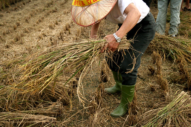 以有機耕作取代依賴石油的糧食生產,並且兼顧生態、對農民公平以及謹慎關懷的原則,才能讓社會永續。攝影:廖靜蕙