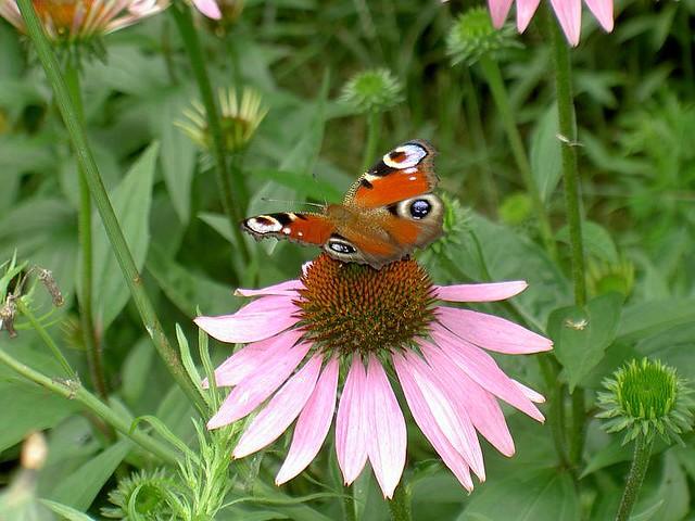 Il mio giardino sawika flickr