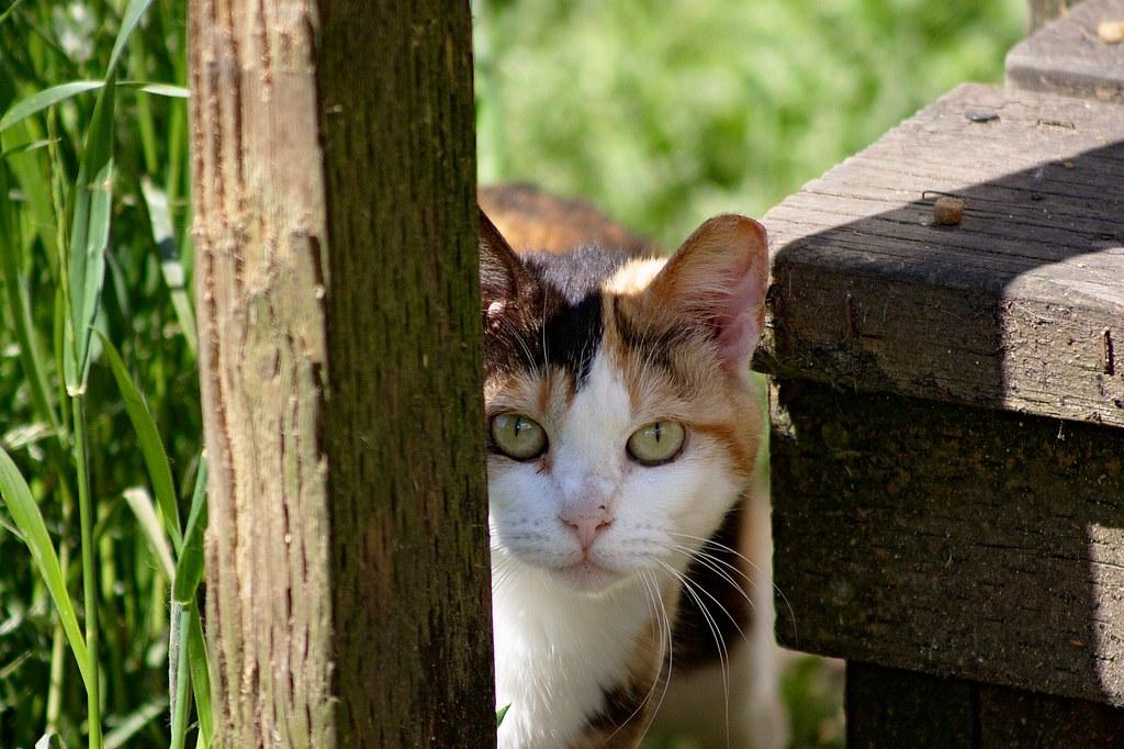 Best Feral Cat Trap