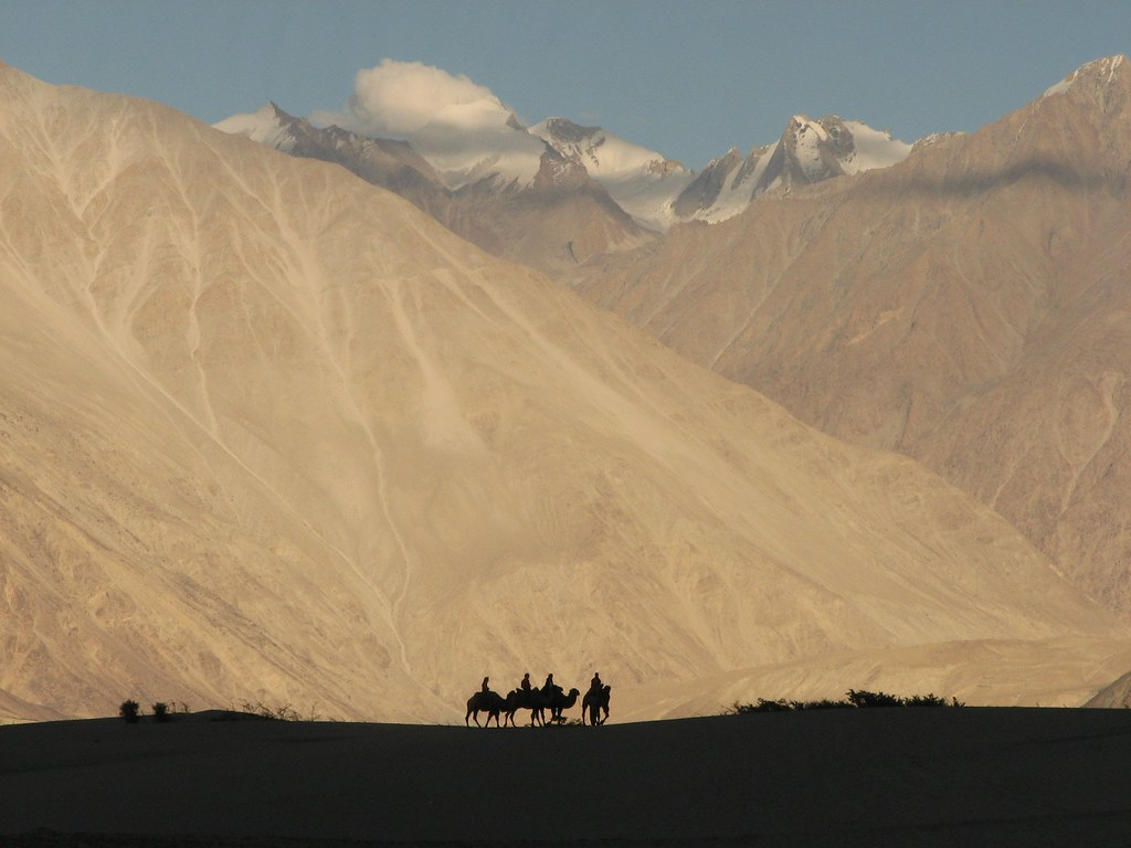 Nubra Valley Camels