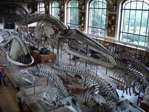 The Paleontology Room | by morganlf