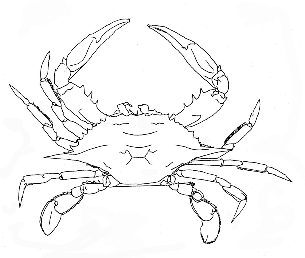 It's just an image of Breathtaking Blue Crab Drawing
