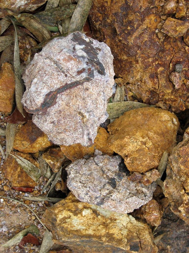 Bosque Del Pueblo Adjuntas Puerto Rico Piedras Con