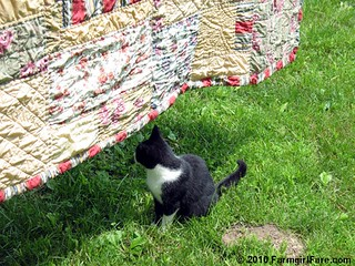 Quilt Attack 1 | by Farmgirl Susan