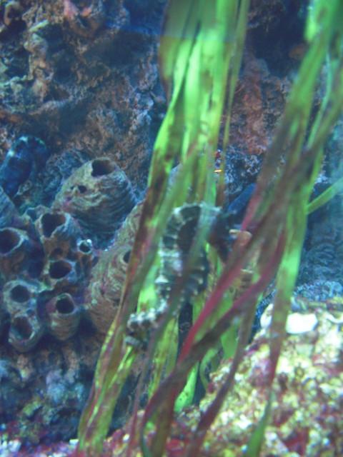Seahorse aquarium in caesar 39 s palace flickr photo for Caesars tropical fish