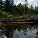 For Sale: Giant Beaver Dam With Attached Lodge