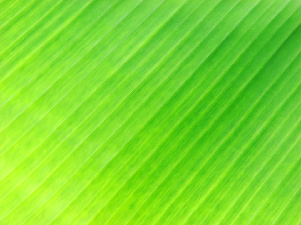 banana leaf wallpaper images
