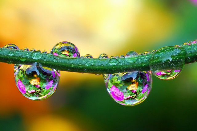what color is the sky in your world? | These water drops ...