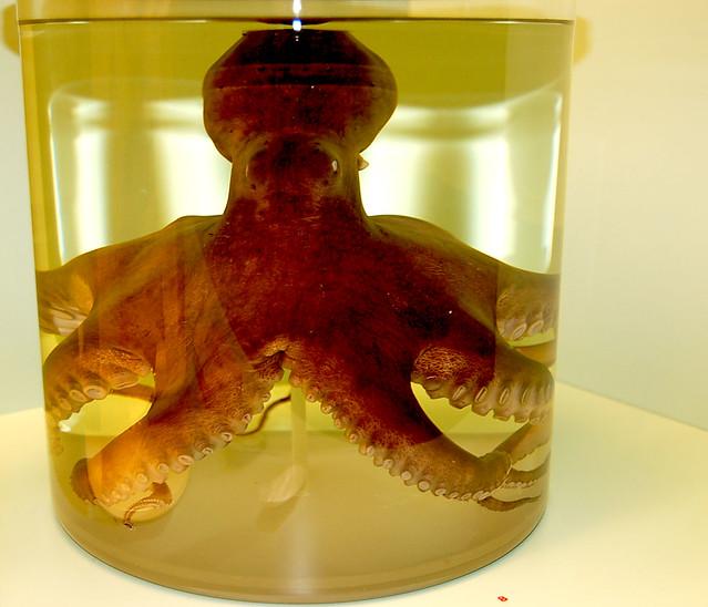 ... Octopus in Jar   From the Naturhistorisches Museum…   Flickr Museum