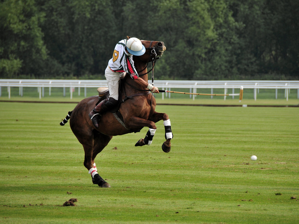 coutts polo chester