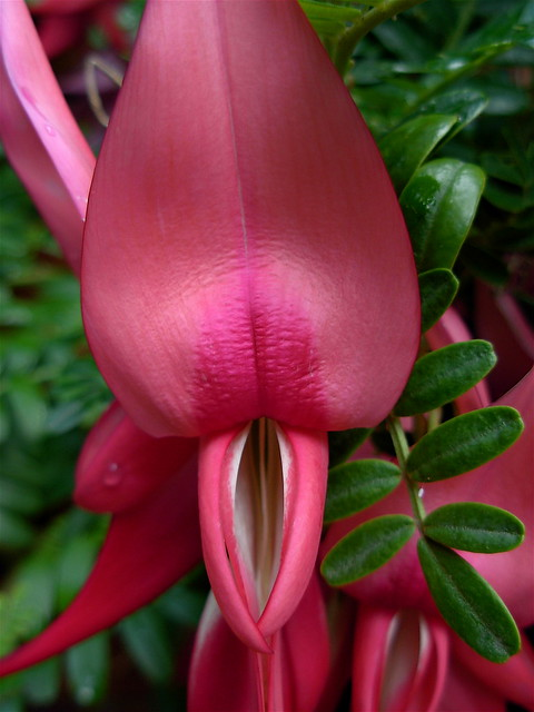 Sex And Flowers 107
