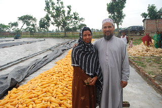 Community loans and training allow Bangladeshi farmers to grow maize | by CIMMYT