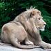 Potters Park Zoo
