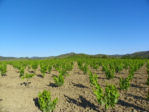 Vineyards above Villeneuve les Corbieres