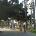 CCSSMShadyTrees