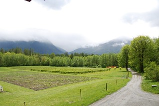 Upper Field from Cascadian Farm's Barn | by Cascadian Farm