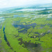 Louisiana Marshlands