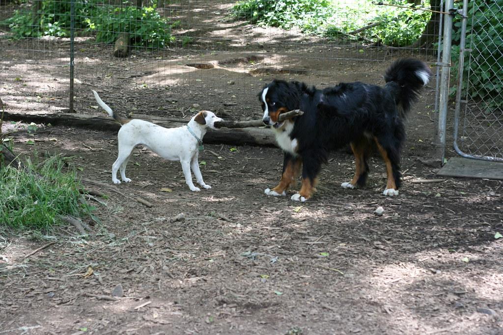The Ranch Dog Kennels St Albert