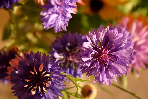PHOTOFRIDAY:  Purple | by mortuzar