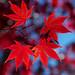 I am thankful for ... vibrant fall colors!