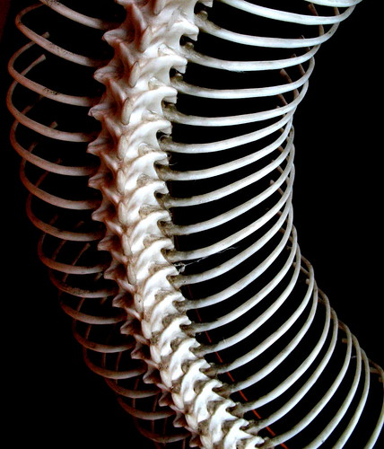 spine | by estherase