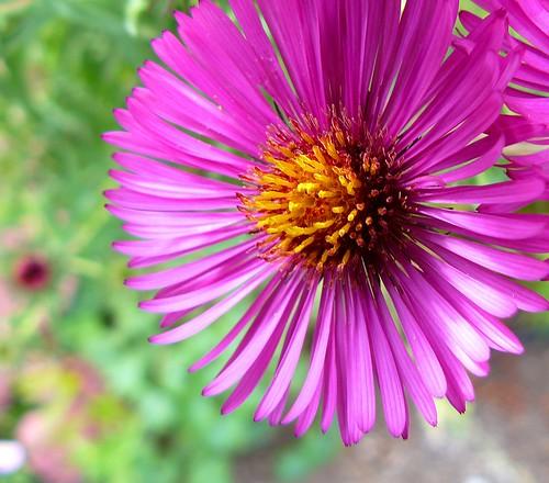 Burst Of Pink In The Carl S English Jr Botanical Garden Flickr