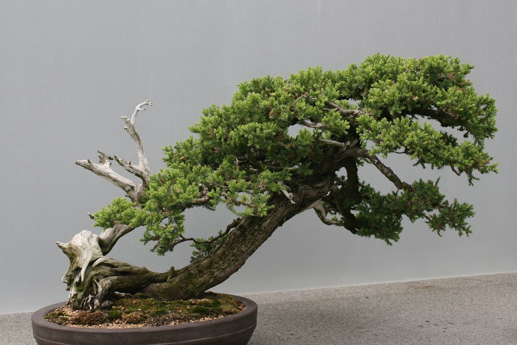 Bonsai The Chicago Botanic Garden Has A Nice Selection