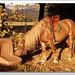 HorsePower II