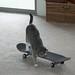 Emi skateboarding