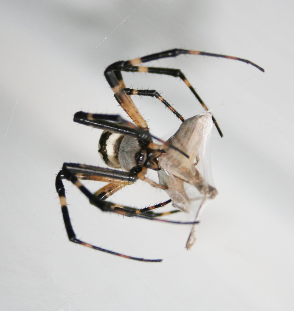 writing spider bite The danger of spider bites to your dog: photos of the wolf spider bite my dog suffered she enjoys writing about her furbabies.