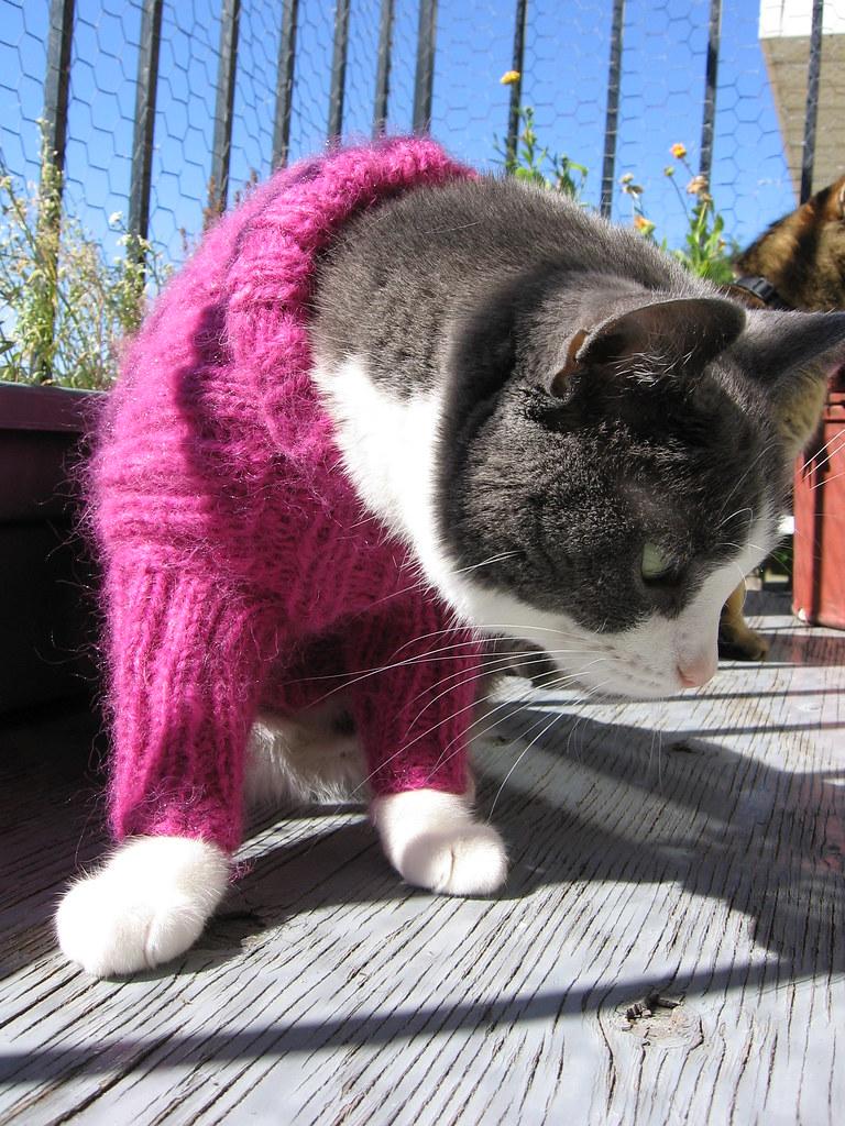 Cat sweater | A free knitting pattern on my website www ...