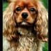 Tucker-King Charles Spaniel