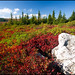 Fall Colors in the Dolly Sods Wilderness Area