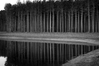 Reflected Pine Trees | by Fellowship of the Rich