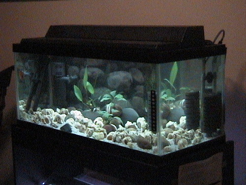 Angle view of 20 gallon long aquarium for multies flickr for Aquarium angle