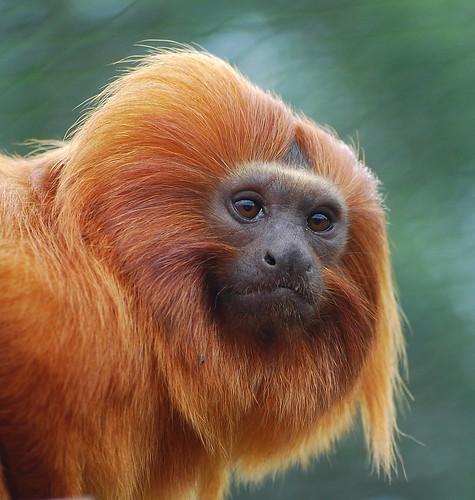 Monkey Face Flickr Photo Sharing