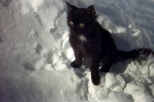Cat in Snow, c1943 | by Rob Ketcherside