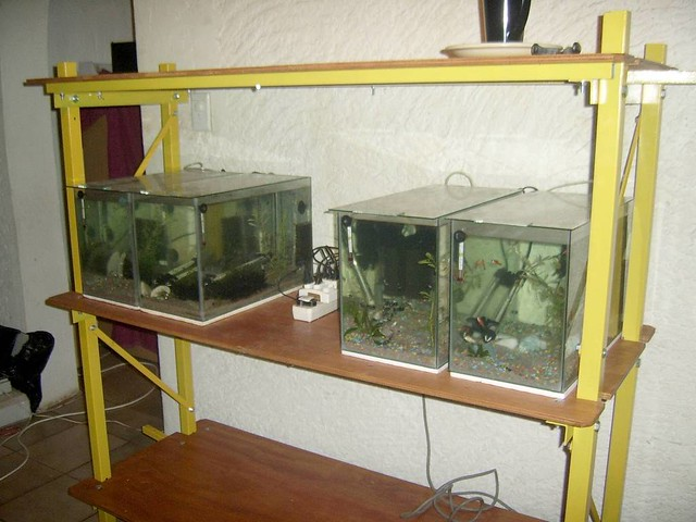 Diy fish tank stand 15 4 of my 5 gallon breeder for 15 gallon fish tank stand