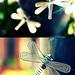 Fireflies Galore