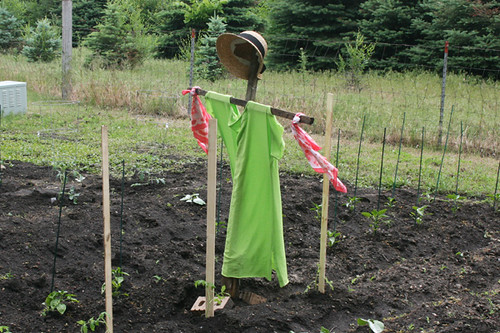 Home made scarecrow ahh mazing home ideas flickr for Scarecrow home decorations co ltd