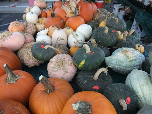 Pumpkins of All Colors, Shapes and Sizes | by swampkitty