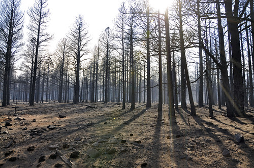 Aftermath of Schultz Fire | by Coconino National Forest