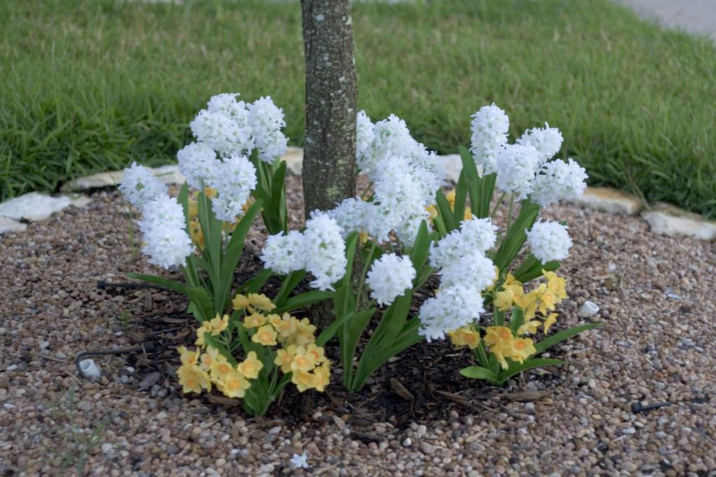 Fake Plastic Flowers In The Neighbors Yard I M Not