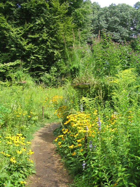Trail With Wildflowers Garden In The Woods Framingham Ma Flickr