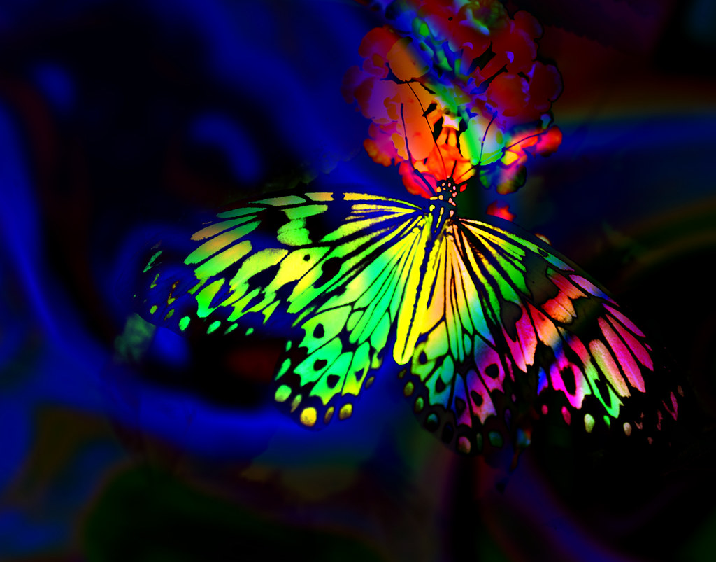 Butterfly Wallpaper Rainbow Butterfly Wallpaper Hd: Check Out My Blog Post About How This