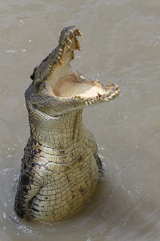 Albino Crocodile  Far Cry Wiki  FANDOM powered by Wikia