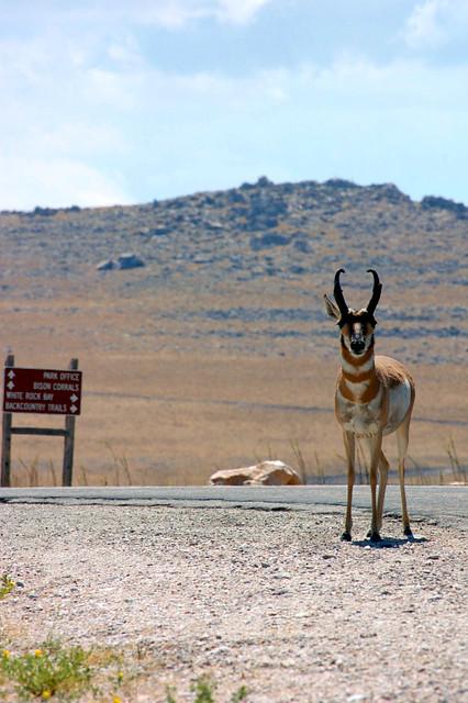 Antelope Island Jobs Utah