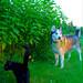 zowie and oakley by jerusalem artichokes