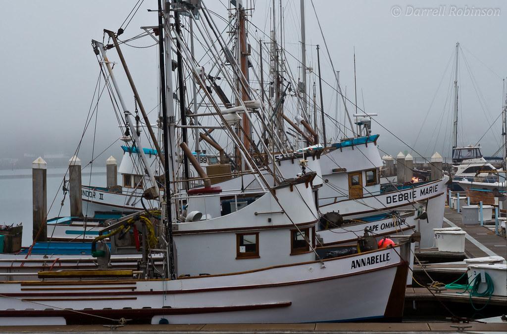 Bodega bay fishing trawlers fishing trawlers docked at for Bodega bay fishing reports