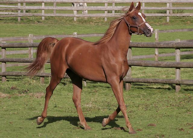 сколько времени занимает работа с одной лошадью для всех